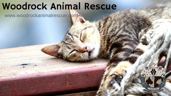 Woodrock Animal Rescue